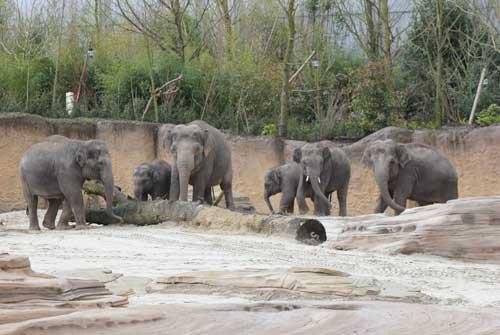 dierenparken