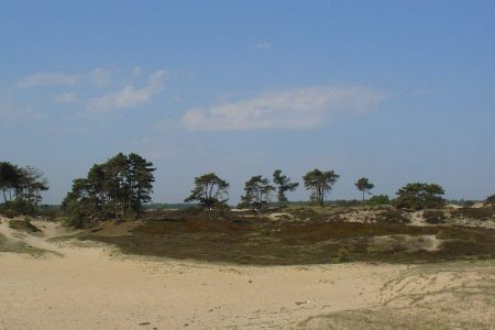 Nationaal Park Drents Friese wold